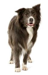 Pet Cremation Service & Pet Crematories Directory